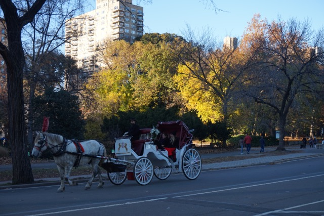 Novembre à Centra Park – NYC